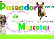 Paseos caninos para su engreido arequipa cayma y otros