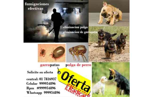 fumigaciones de casas, eliminacion de pulgas de perro, fumigaciones en los olivos