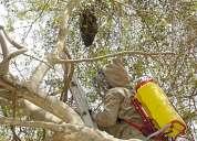 Fumigacion de abejas ..!! retiro de panales 363-3521