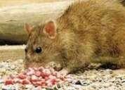 Fumigacion de ratas desratizamos matamos   7968942 - 975255535