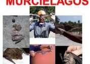 Fumigar murcielagos, ahuyentar murcielagos, fumigaciones 492-5106
