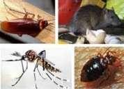 Fumigacion pulgas pulguillas  eliminamos  7968942 - 975255535
