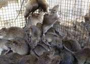 Fumigacion,control de plagas residencial y comercial,manejo integrado de aves y ratas eko planeet