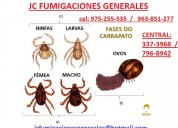 Garra patas pulgas eliminamos  7968942 - 989957783