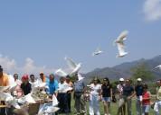Palomas blancas alquilamos para soltar en ceremonias y eventos peru