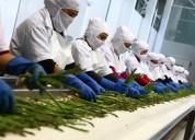 Tramites de registros sanitarios de alimentos digesa