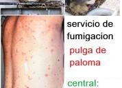 Eliminamos pulgas de paloma