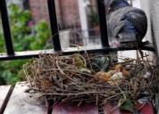piojillo de palomas en los techos, ventanas, lince, llamen 7921588 / 952751166