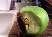 Producto-natural-contra-cucarachas-los-olivos-independencia-7921588 - 992049431
