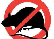 Oferta de fumigacion de ratas, cucarachas, pulgas y acaros 913775525