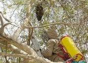 sacamos panales de abejas que se instalan en luga