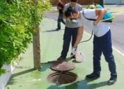 Saneamiento ambiental de nuestra ciudad insectos