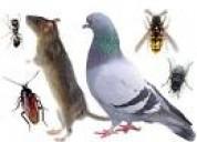 fumigaciones efectivas, eliminacion de pulgas de