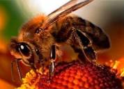 ¿tienes abejas en tu casa? contactanos 7921588 som