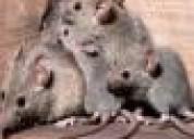 Tienes ratas llamanos ya   7968942 . 989957783