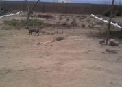 Terreno en las lomas de huanchaco en trujillo