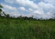 Vendo terreno agricola 133 hectareas en coronel portillo