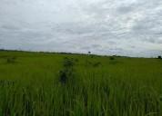 remate 133 hectareas en coronel portillo
