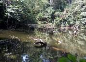 30 hectareas y 7 hectareas de terreno tarapoto chazuta en san martín