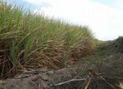 Vendo 4 hectarias de terreno en chiclayo