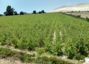 se vende calango 120 hectareas para condominio de casas de campo