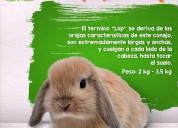 Petshop, conejos, accesorios mascotas