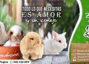 Conejos mascota arequipa
