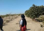 Se vende Terreno en Sector La Yarada km 35 Tacna