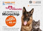 Vet mundo pets – veterinaria en sjl