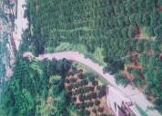 Venta de lote urbano en selva central