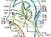 Paralisis facial tramiento fisioterapeutico